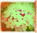 wpid-2012-05-12-13-42-47-1-1-1.jpg