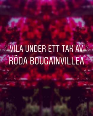 Och så detta tak av röda Bouganvillea!